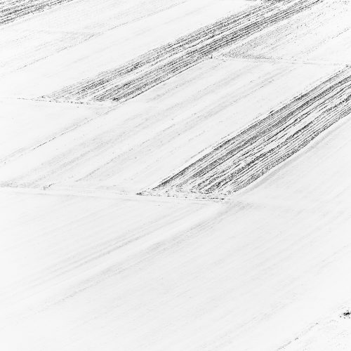 lentils fields in wintertimes - #1