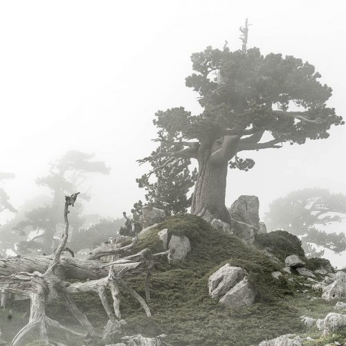 young hearts of ancient trees -130x90 - #3